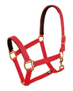 "PVC Padded 1"" Poly Web Halter with snap, Brass-Plated Hardware"