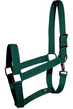 "Draft Halter, 1 1/2"" Poly Web Halter with Snap"