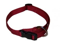"Small Adjustable Dog Collar, Premium 1"" Nylon"