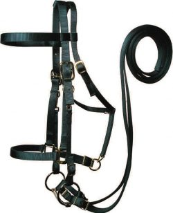 Draft Trail Bridle w/ Removable Bit & Reins