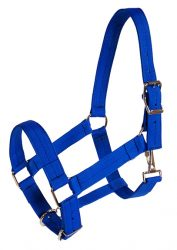 "Draft Halter, 1 1/2"" Poly Web Adjustable Halter"